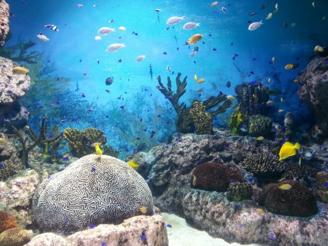 Underwater picture of corals and fishes